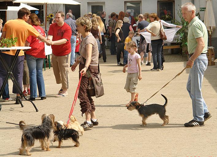 Tierheim Koppelweide Wiehl Hunde